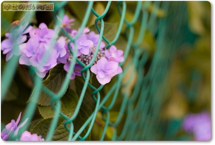 daizukandaizukan-photo-0496.jpg