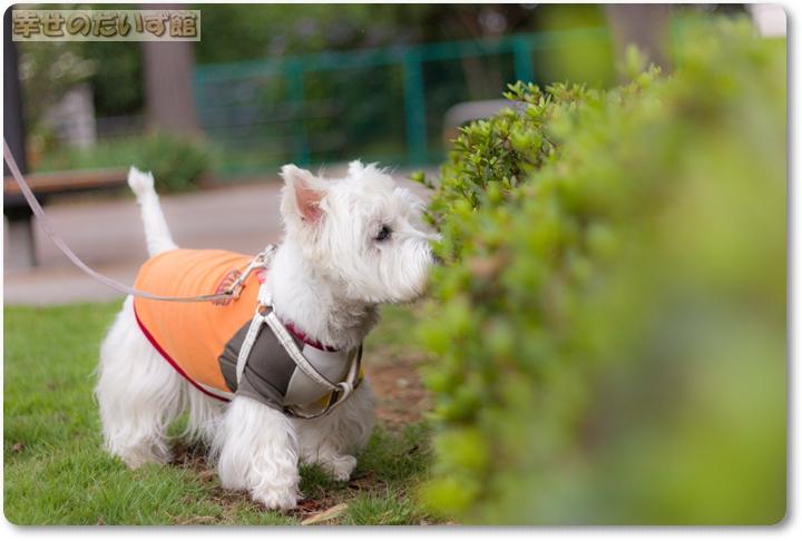 daizukandaizukan-photo-0503.jpg