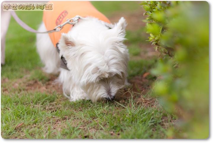 daizukandaizukan-photo-0508.jpg