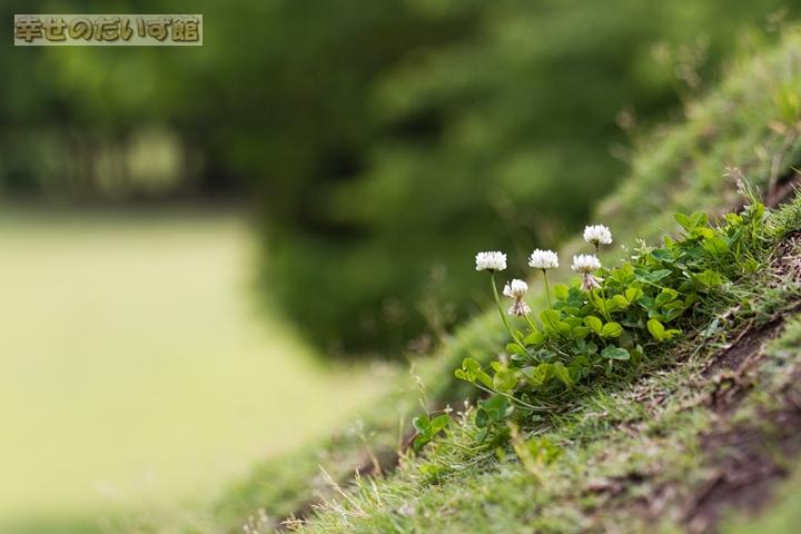 daizukandaizukan-photo-0697.jpg