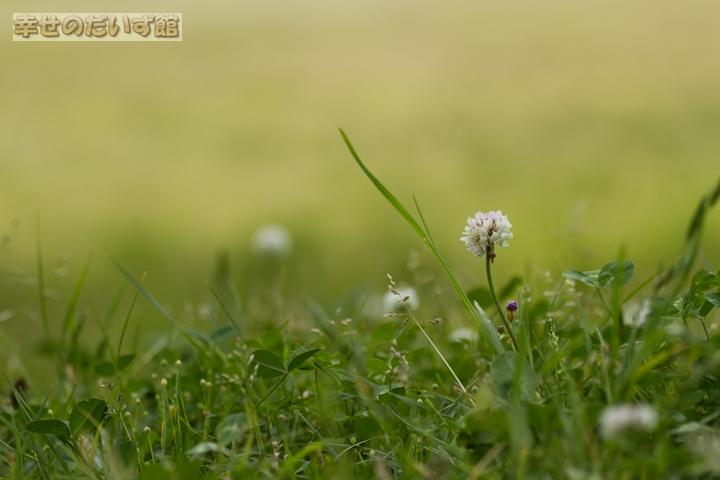 daizukandaizukan-photo-0700.jpg