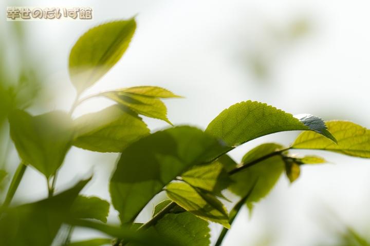 daizukandaizukan-photo-0726.jpg