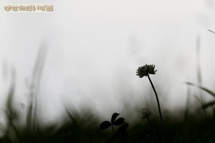 daizukandaizukan-photo-0736.jpg