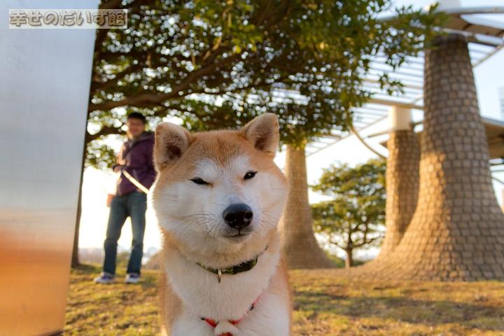 daizukandaizukan-photo-5988.jpg