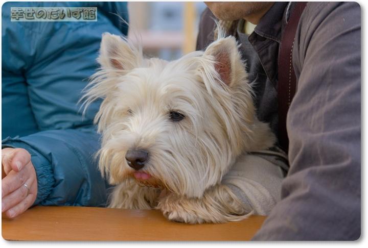 daizukandaizukan-photo-8343.jpg