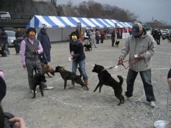 ブログ リラ未成犬064