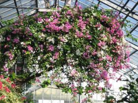 2009年植物園2
