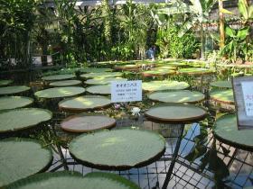 2009年植物園3