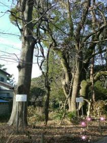 玉敷神社2