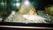 板橋区立淡水魚水族館ウーパールーパー