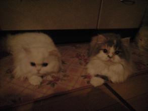 ミルミとアリス4・5