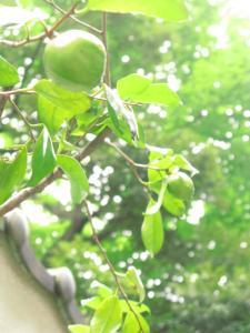★緑がきれいです★
