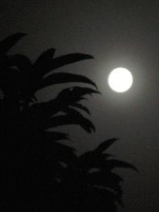 ★今夜は七夕満月★