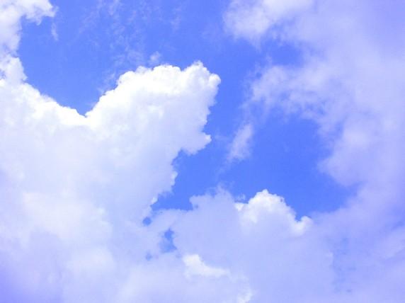 20080907c.jpg