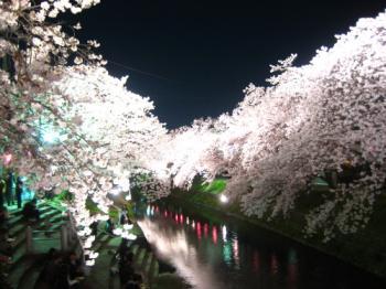 47sakura10001.jpg