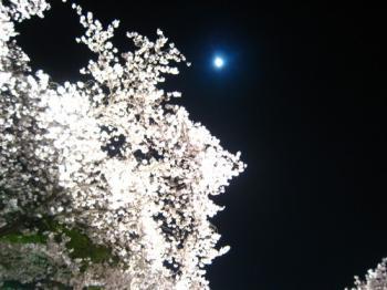 47sakura20001.jpg