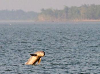 dolphinsfoundbig.jpg