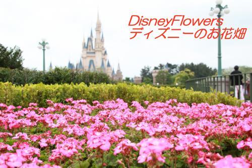 spring_land_kadan01.jpg