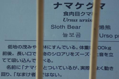 東山動物園_ナマケグマ_食肉目クマ科