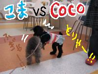 Coco こま