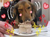 ターボ ケーキ