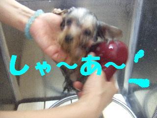 2008_10110025.jpg