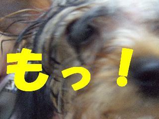 2008_10110028.jpg