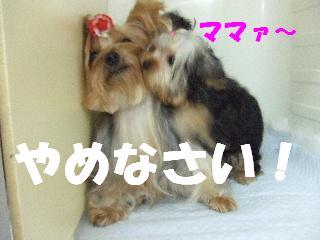 2008_10110035.jpg