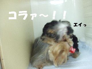 2008_10110039.jpg