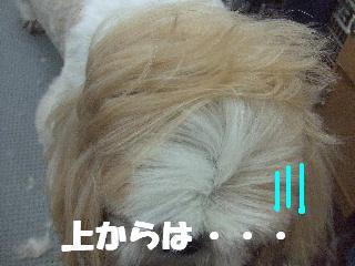 2008_10140024.jpg