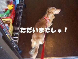 2008_10180039.jpg