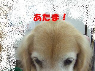 2008_10180067.jpg