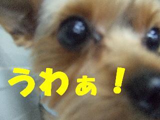 2008_10210047.jpg