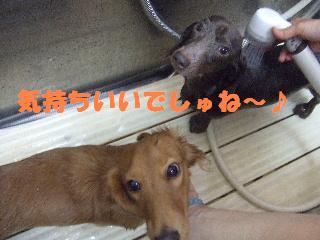 2008_10250010.jpg