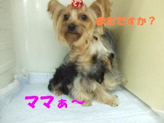 2008_10250034.jpg