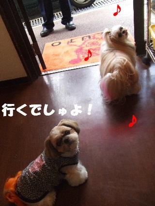 2008_10280002.jpg
