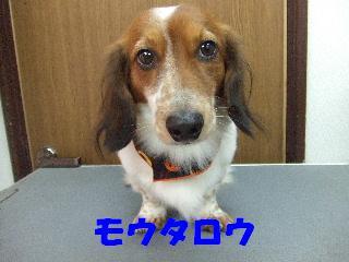 2008_10280033.jpg