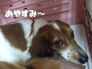 2008_10280038.jpg