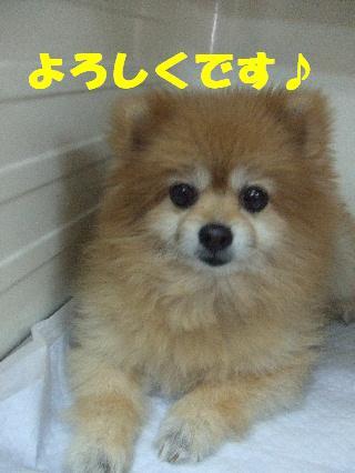 2008_11040009.jpg