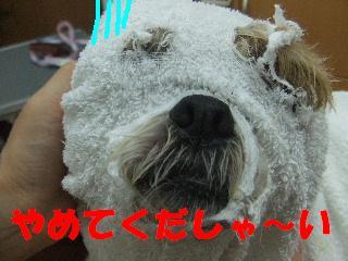 2008_11040050.jpg