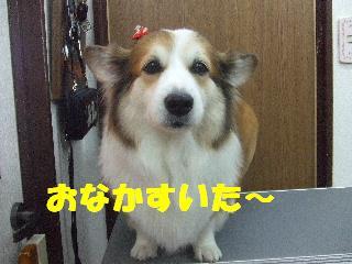 2008_11040098.jpg