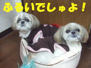 2008_11080043.jpg