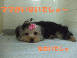 2008_11080062.jpg