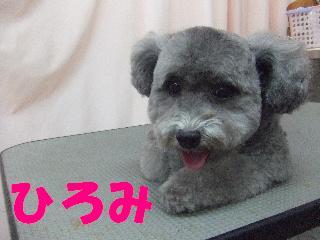 2008_11080076.jpg