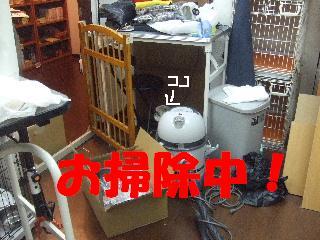 2008_11080103.jpg