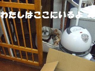 2008_11080104.jpg