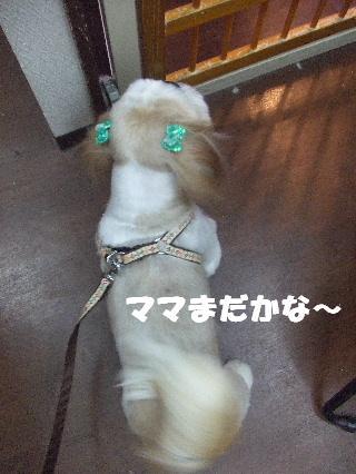 2008_11110046.jpg