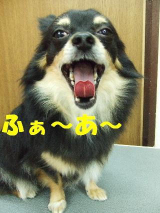 2008_11180033.jpg