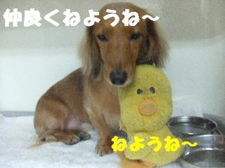 2008_11180114.jpg