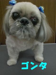 CIMG7946.jpg